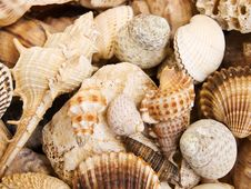 Free Seashells Background Stock Photography - 20380732