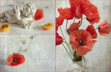 Free Poppies Royalty Free Stock Photography - 20381047