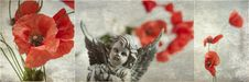 Free Poppies Stock Images - 20381054