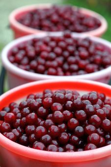 Free Cherries In Buckets Royalty Free Stock Photos - 20381188