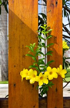 Free Yellow Flowers. Stock Image - 20381691