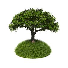 Free Green Tree With Grass Royalty Free Stock Image - 20382236