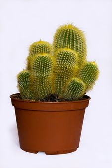Free Green Spiny Cactus Stock Photo - 20382290