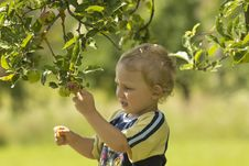 Free Blond Boy In The Orchard Stock Images - 20382554