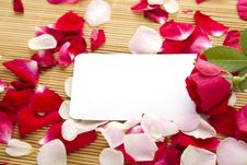 Free Card And Roses Royalty Free Stock Photography - 20383807