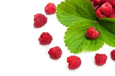 Fresh Raspberry And Green Leaf Stock Photo