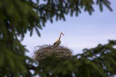 Free Stork Royalty Free Stock Image - 20384856