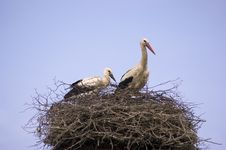 Free Two Storks On A Nest Stock Photo - 20384870