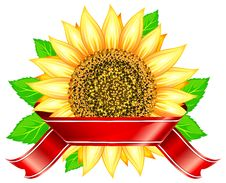 Free Sunflower & Ribbon Royalty Free Stock Photography - 20385147