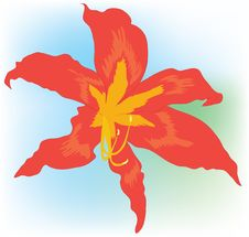 Free Beautiful Orange Lily. Stock Photography - 20385242