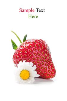 Free Fresh Strawberry And Flower Royalty Free Stock Photos - 20385328