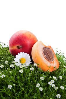 Free Fresh Apricot On A Green Grass Stock Photo - 20385380