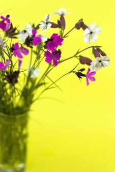 Free Wild Flowers On A Yellow Background Stock Photography - 20385452