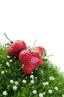 Free Fresh Strawberry On A Green Grass Royalty Free Stock Photography - 20385517