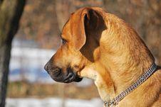 Free Dog Stock Photos - 20385873