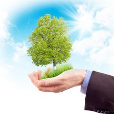 Free Human Hand With Grass And Tree Stock Images - 20386214