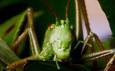 Free Grasshopper Stock Image - 20386921