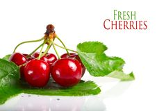 Free Fresh Cherry Berries With Leaves Stock Images - 20387554