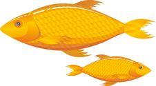 Free Fish Royalty Free Stock Photography - 20388237