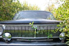 Free Radiator Of The Automobile With Green Foliage Royalty Free Stock Photo - 20388745
