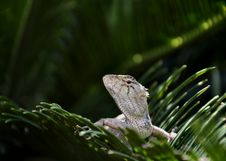 Free Lizard On Green Leaf Royalty Free Stock Photos - 20389168