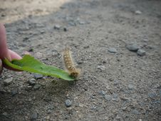 Free Macro Caterpillar Royalty Free Stock Image - 20389326