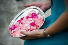 Flower Petals Ready To Be Tossed Stock Photo