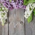 Free Beautiful Lilac Stock Image - 20394241
