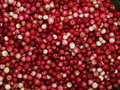 Free Cowberry Background Royalty Free Stock Photo - 20399485