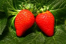 Free Strawberry Stock Photo - 20390060