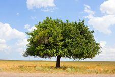 Free Alone Tree Stock Photography - 20390392