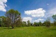 Free Green Meadow In Park Stock Photography - 20390482