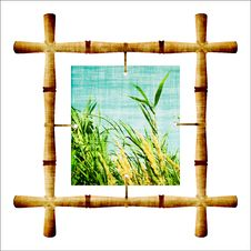 Free Bamboo Royalty Free Stock Images - 20390559