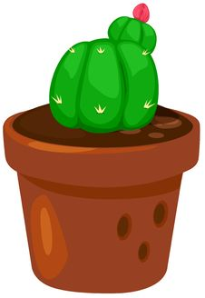Free Cactus Royalty Free Stock Images - 20393149