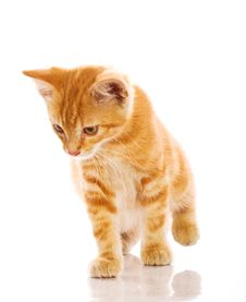 Free Red Little Cat Stock Photos - 20393953