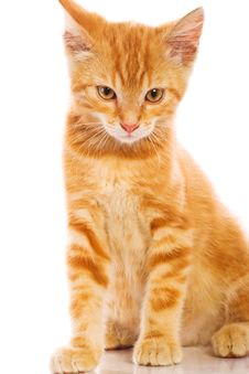 Free Red Little Cat Royalty Free Stock Images - 20394009