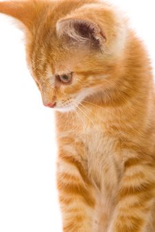 Free Red Little Cat Stock Photography - 20394012