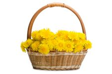 Free Yellow Dandelion On White Royalty Free Stock Images - 20394079
