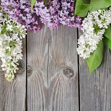Free Beautiful Lilac Stock Image - 20394241