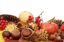 Free Autumn Leaves And Fruits Stock Images - 20394244