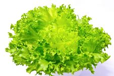 Free Fresh Green Iceberg Lettuce Royalty Free Stock Photo - 20396165