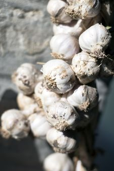 Free Garlic Royalty Free Stock Images - 20397309