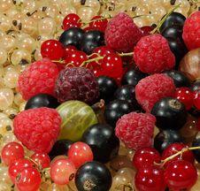 Free Mix Of Berries Stock Photos - 20399413