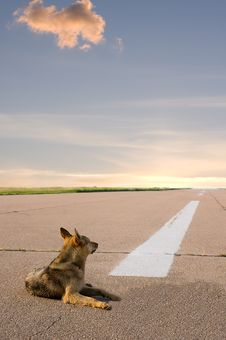Free Runway Stock Image - 20399481