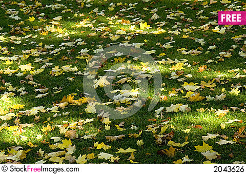 Free Sun Shade And Leaves Royalty Free Stock Image - 2043626