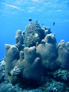 Coral Reef Formation And Fish Stock Images