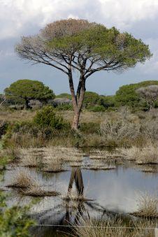 Free Tree Reflection Royalty Free Stock Image - 2044876