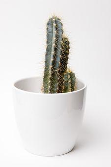 Free Cactus Stock Photo - 2047610
