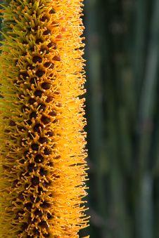 Free Aloe Flower Stock Photography - 2049222