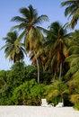 Free Beautiful Tropical Beach Stock Image - 20407141